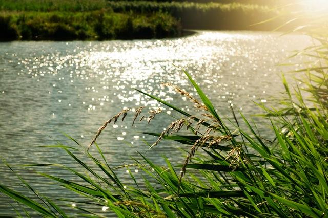 川の流れのような人Photo By PEXELS