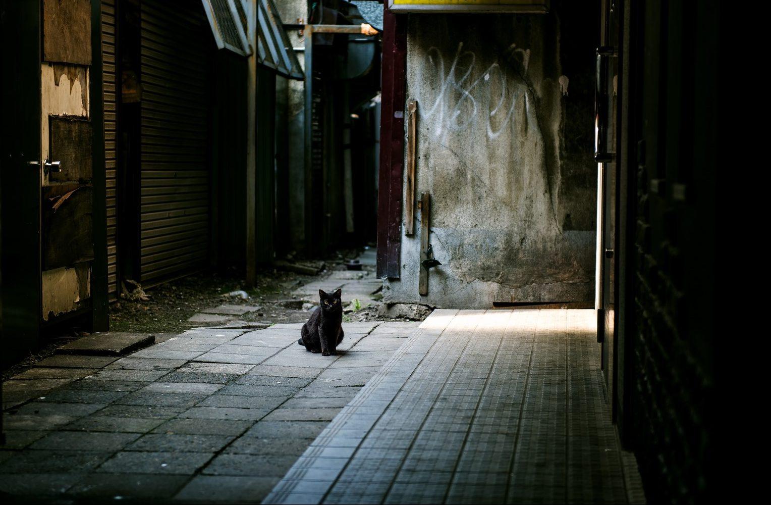 路地の占い師に占ってもらったのは不思議な体験だった Photo By ぱくたそ